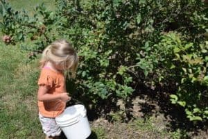 how to plan a berry picking adventure